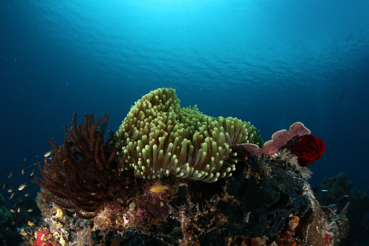 Beautiful Coral off PNG